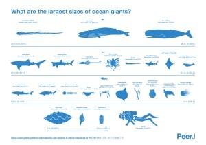 Marine_megafauna_Infographic-600x422
